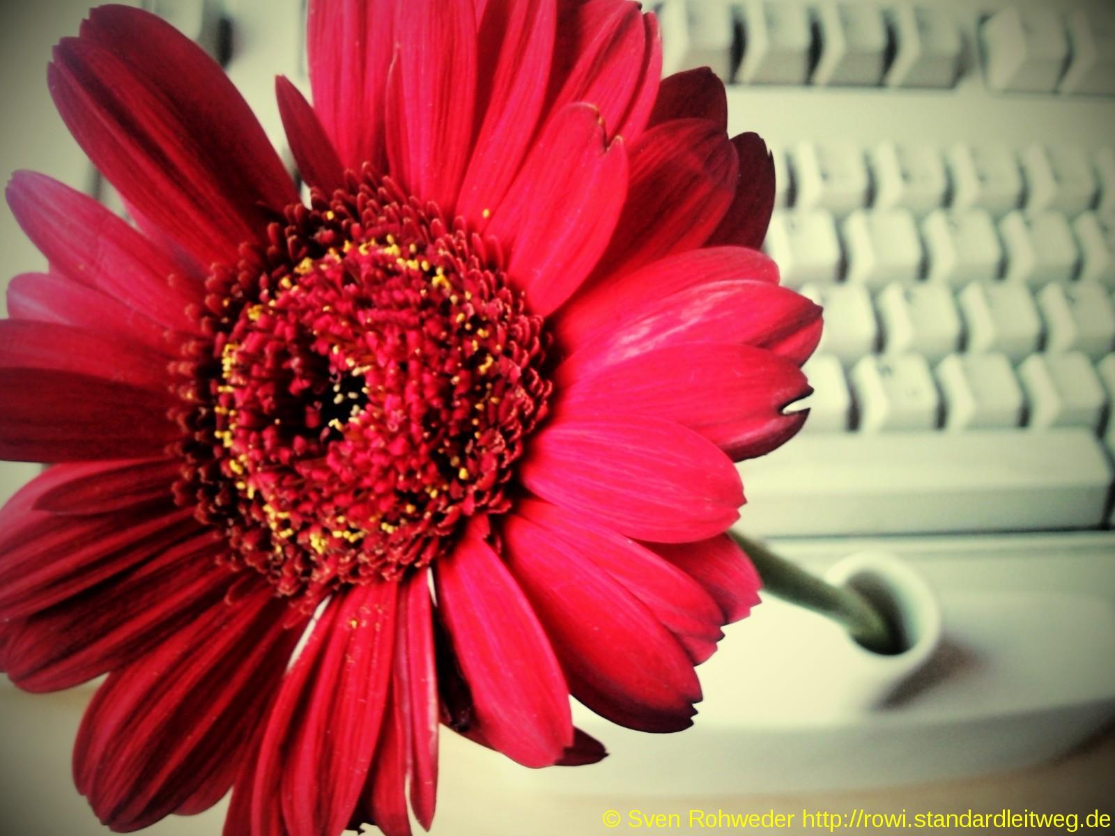 Blumen Tastatur
